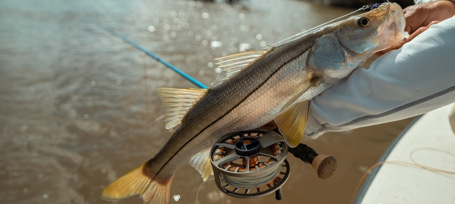 TFO Axiom 2 X with Snook
